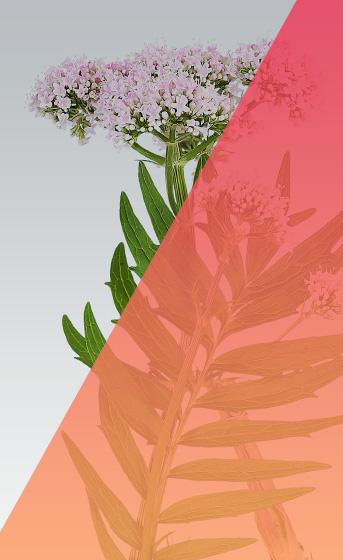 Medizinische Pflanzen